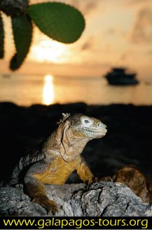 Catamaran Luxury class Galapagos Tours